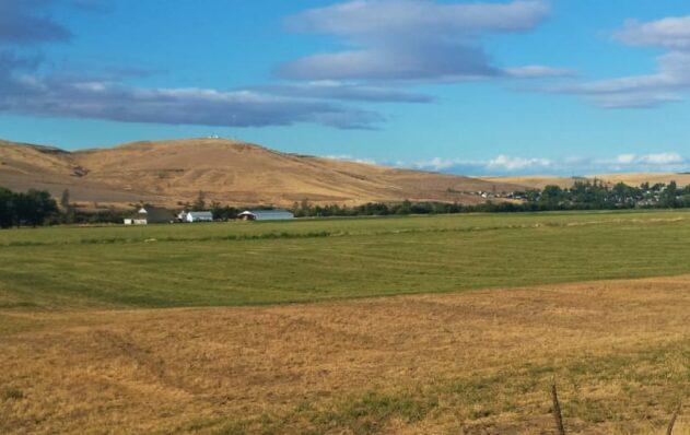 Wheat fields, Dufur OR