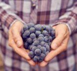 Frosty grapes